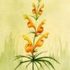 Erotische Pflanze