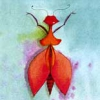Spitzbusen-Insekt