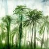 Palmen im Regenwald