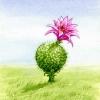 golf-kaktus